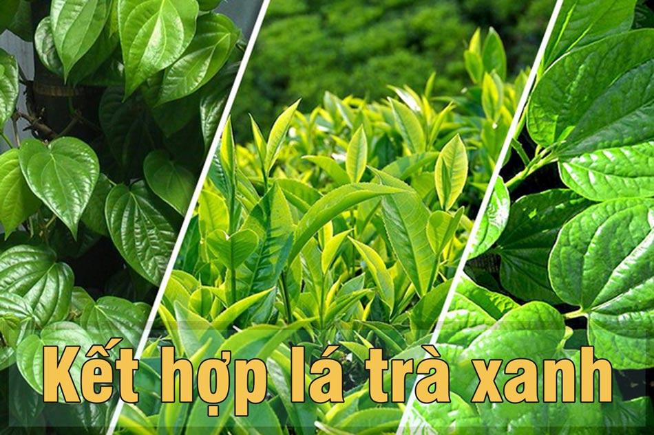 Trị ngứa vùng kín trầu không kết hợp trà xanh